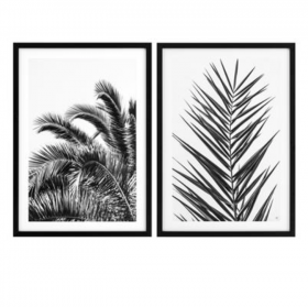 Palm Leaves Black and White Prints